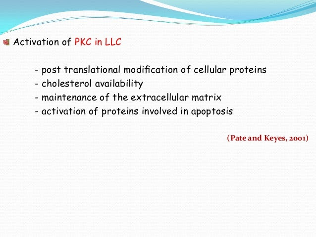 Activation of PKC in LLC - post translational modification of cellular proteins - cholesterol availability - maintenance of...