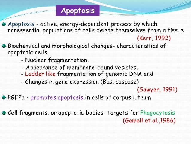 Apoptosis Apoptosis - active, energy-dependent process by which nonessential populations of cells delete themselves from a...