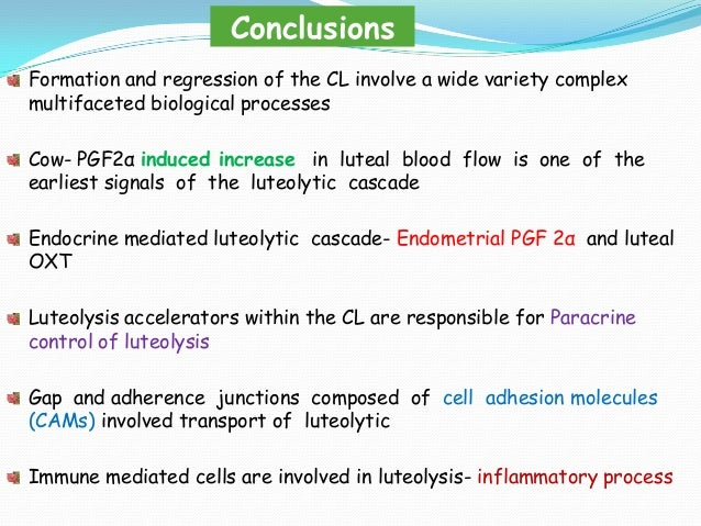 Conclusions Formation and regression of the CL involve a wide variety complex multifaceted biological processes Cow- PGF2α...