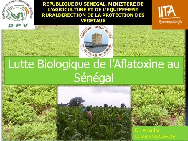 Lutte Biologique de l'Aflatoxine au Sénégal Dr. Amadou Lamine SENGHOR REPUBLIQUE DU SENEGAL, MINISTERE DE L'AGRICULTURE ET...