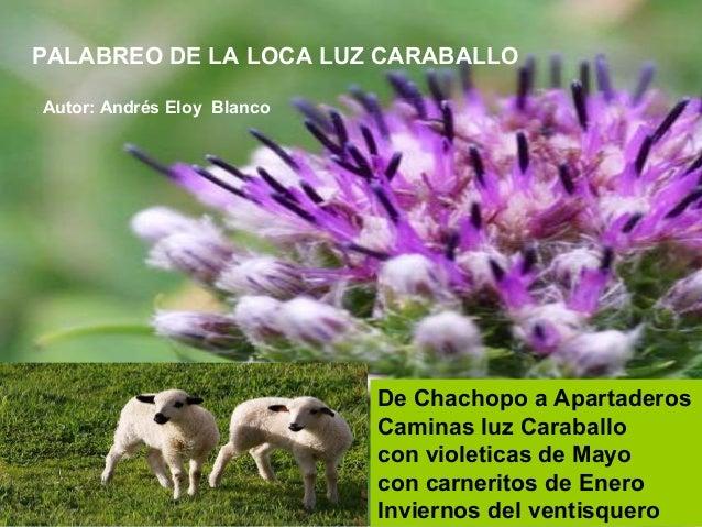 De Chachopo a Apartaderos Caminas luz Caraballo con violeticas de Mayo con carneritos de Enero Inviernos del ventisquero P...
