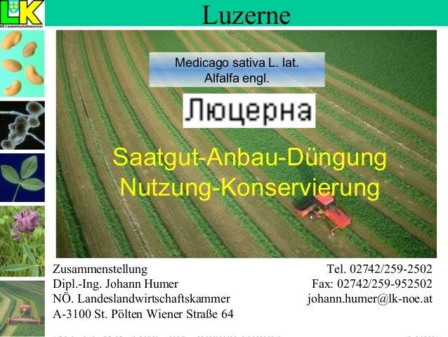 Luzerne Medicago sativa L. lat. Alfalfa engl.  Saatgut-Anbau-Düngung Nutzung-Konservierung Zusammenstellung Dipl.-Ing. Joh...