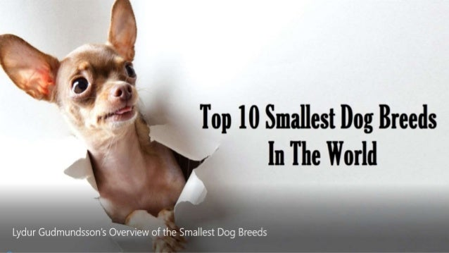 Lydur Gudmundsson's favourite small dog breeds