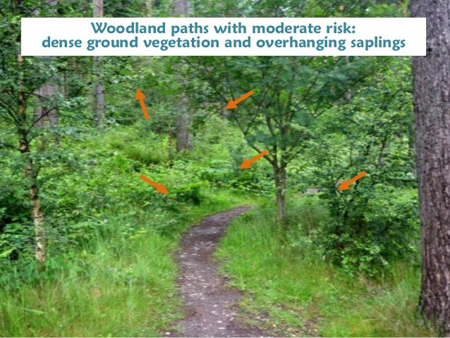 Management objectives for a semi natural woodland