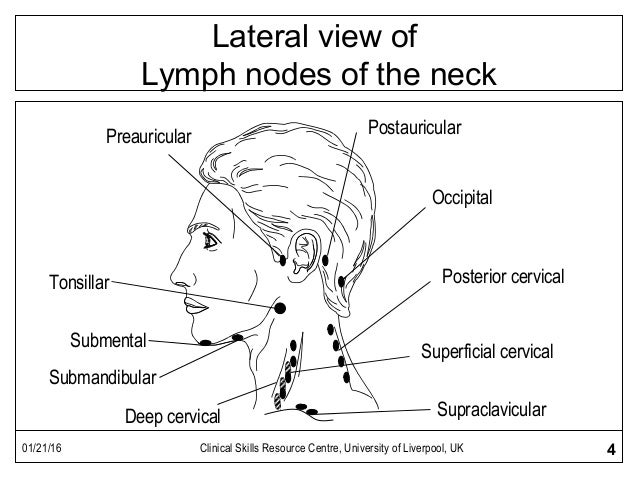 Lymph node examination ccuart Image collections