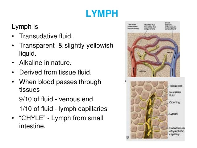 lymph and lymphatic system, Human Body