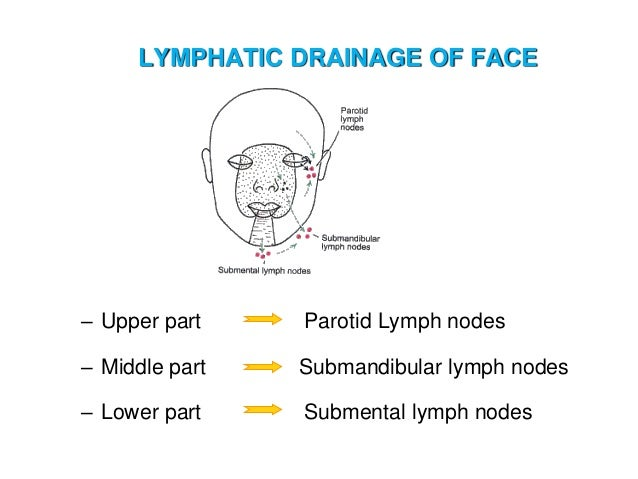 Lymph and lymphatic system submental lymph nodes 65 ccuart Gallery