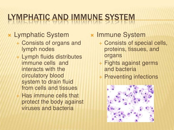 The Lymphatic and Immune System