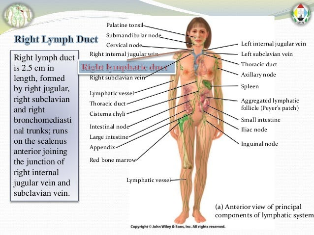 lymphatic drainage of whole body by faisal azmi