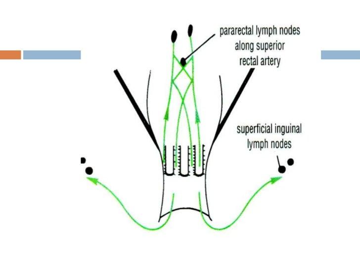 Lymphatic drainage of major organs