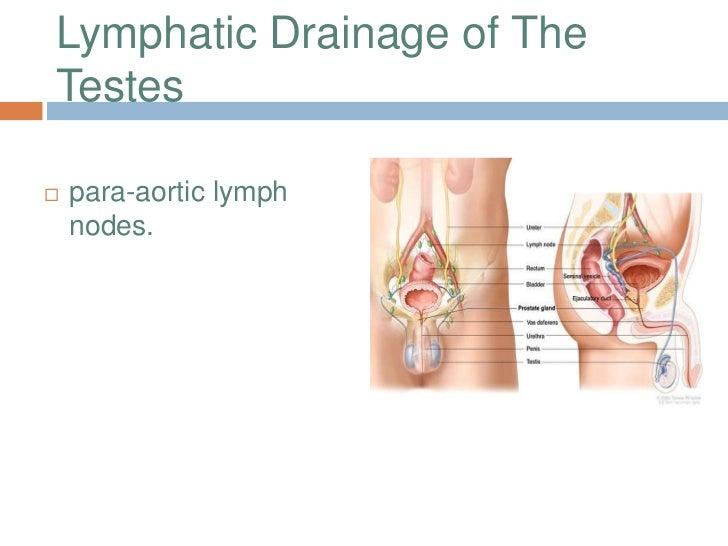 lymph penis