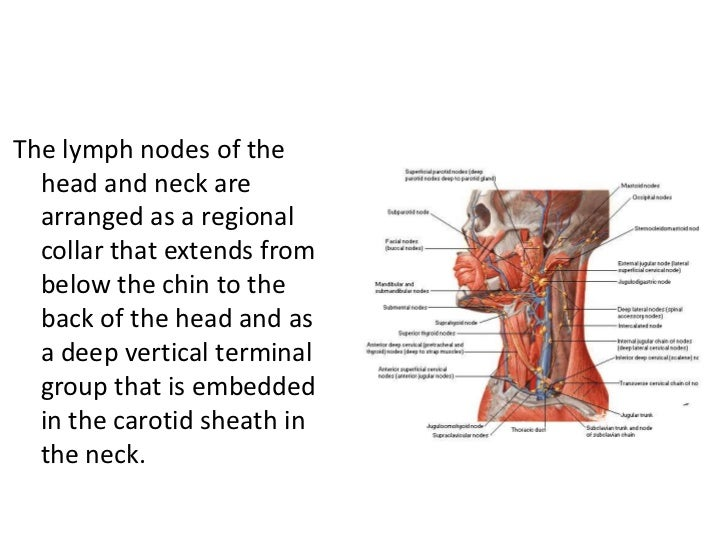 Lymphatics Of The Head And Neck