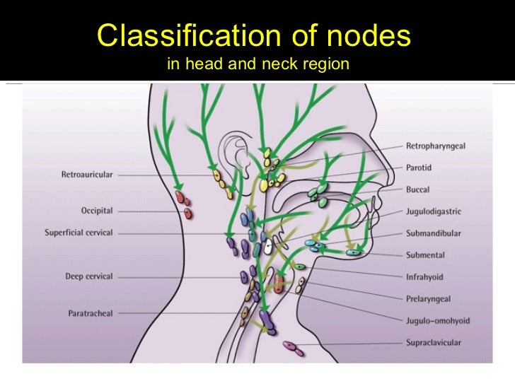 Lymphatics of the head & neck