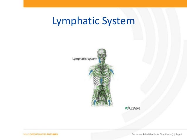 Document Title (Editable via 'Slide Master') | Page 1 Lymphatic System
