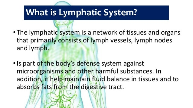 human anatomy and physiology - lymphatic system and body defenses, Human Body