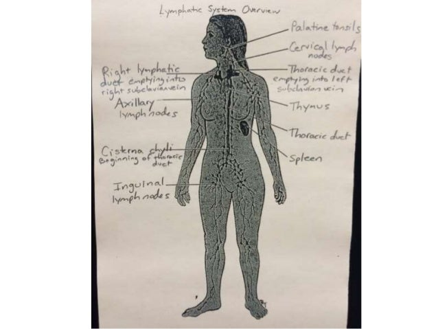 Lymphatic System Diagrams