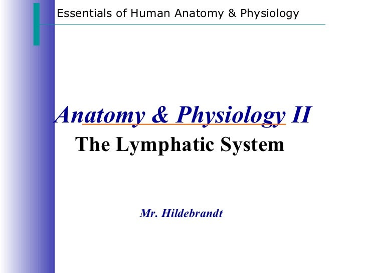 Essentials of Human Anatomy & PhysiologyAnatomy & Physiology II  The Lymphatic System             Mr. Hildebrandt