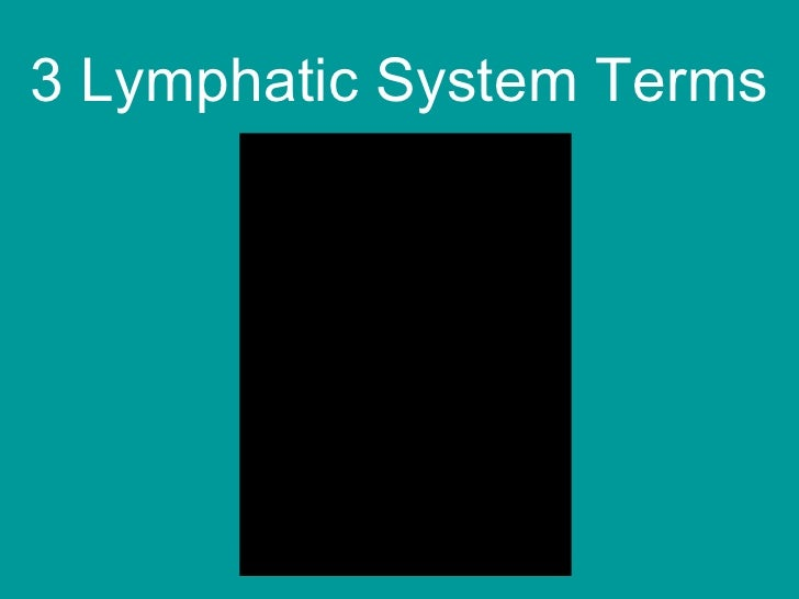 3 Lymphatic System Terms