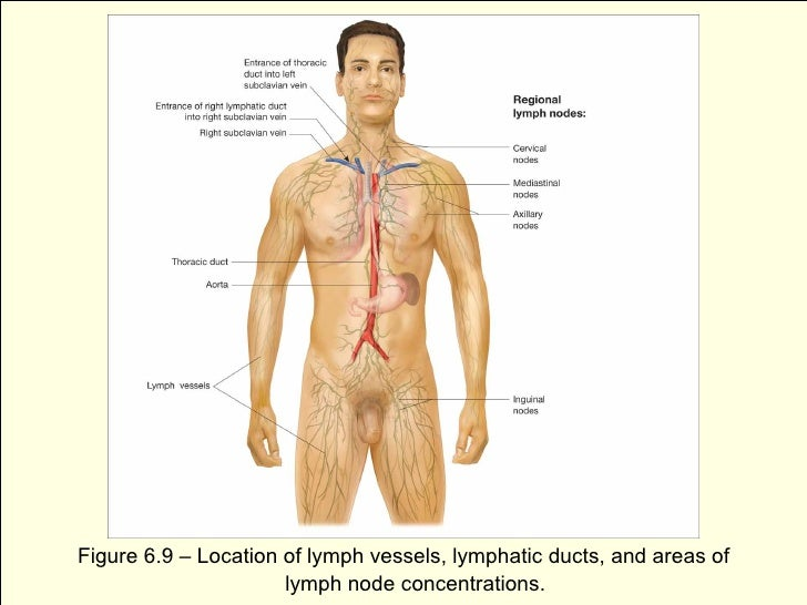 Lymphedema Immune Systemb