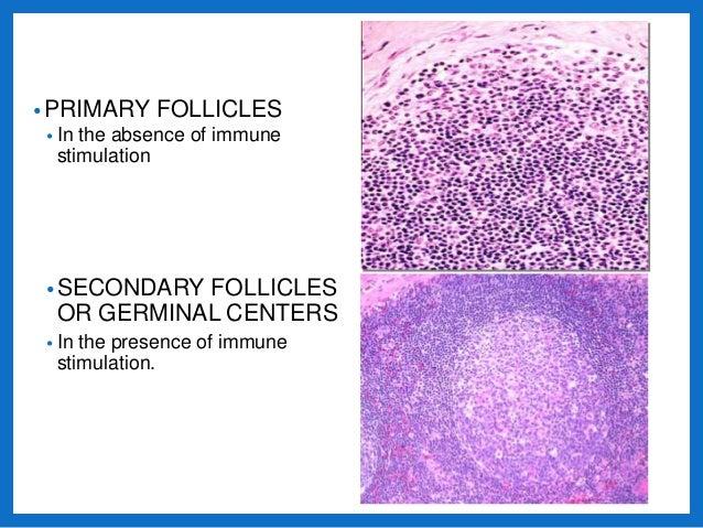 Vesicular Follicle Histology and patholog...