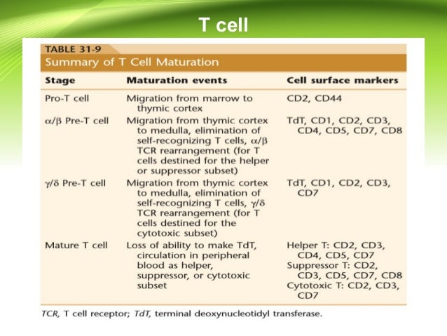 Lymphocyte production and maturation