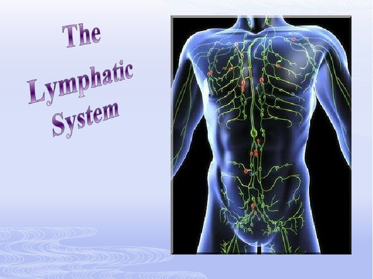 The<br />Lymphatic System<br />