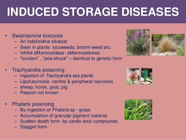 INDUCED STORAGE DISEASES • Swainsonine toxicosis – An indolizidine alkaloid – Seen in plants- locoweeds, broom weed etc. –...