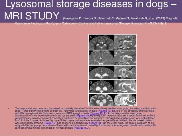 Lysosomal storage diseases in dogs – MRI STUDY (Hasegawa D, Tamura S, Nakamoto Y, Matsuki N, Takahashi K, et al. (2013) Ma...
