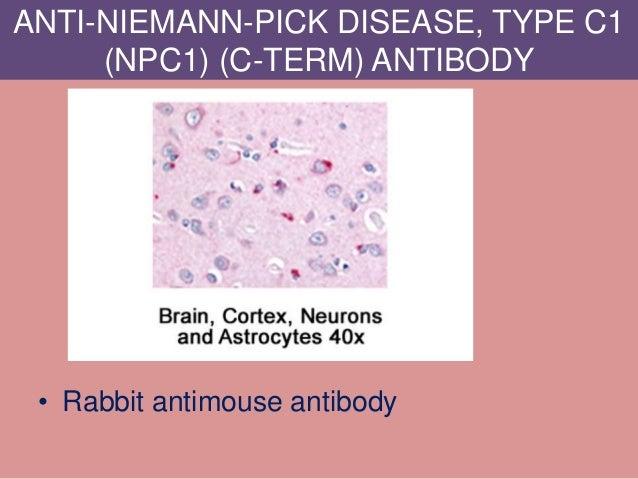 ANTI-NIEMANN-PICK DISEASE, TYPE C1 (NPC1) (C-TERM) ANTIBODY • Rabbit antimouse antibody