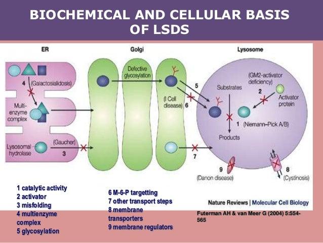 BIOCHEMICAL AND CELLULAR BASIS OF LSDS Futerman AH & van Meer G (2004) 5:554- 565 1 catalytic activity 2 activator 3 misfo...