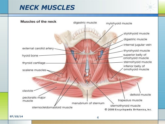 Neck Chest Diagram Wiring Library