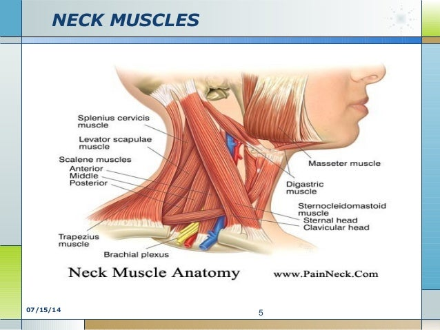 Neck Chest Diagram - Trusted Wiring Diagram •