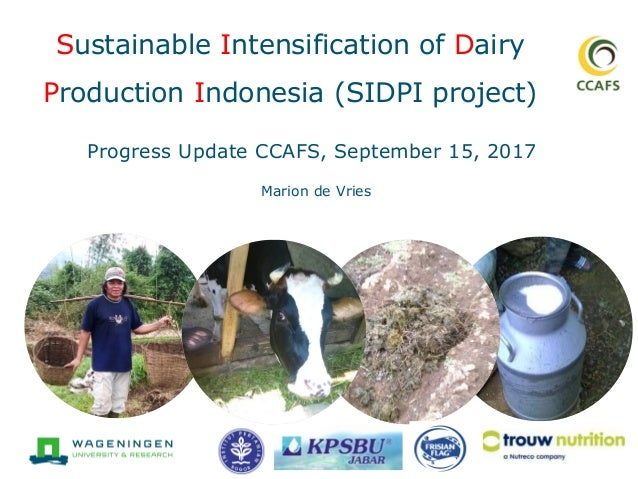 Sustainable Intensification of Dairy Production Indonesia (SIDPI project) Marion de Vries Progress Update CCAFS, September...