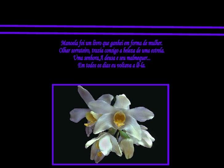 Manoela foi um livro que ganhei em forma de mulher. Olhar sorrateiro, trazia consigo a beleza de uma estrela. Uma senhora....