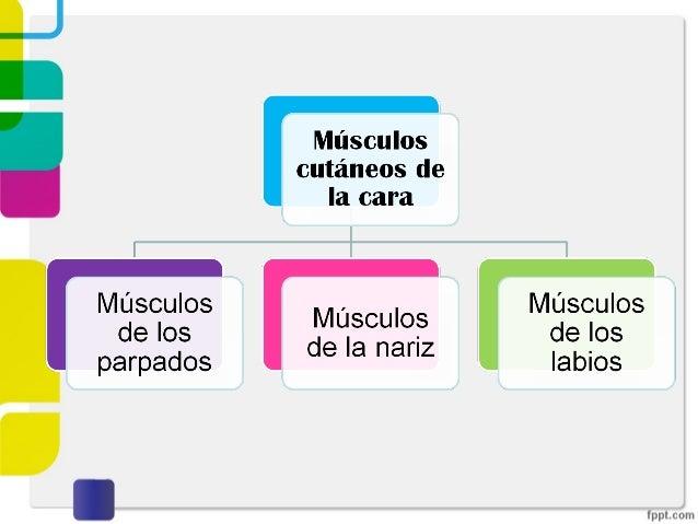 M. cutaneos de la cara Slide 2