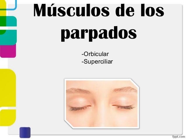 M. cutaneos de la cara Slide 3
