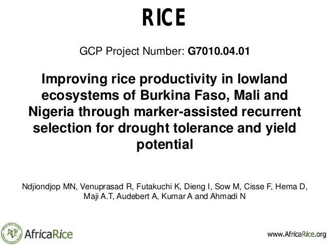 RICE GCP Project Number: G7010.04.01 Improving rice productivity in lowland ecosystems of Burkina Faso, Mali and Nigeria t...