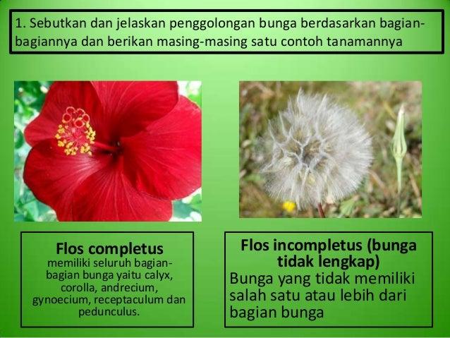 M15 Kelompok 7 Bunga Dan Buah