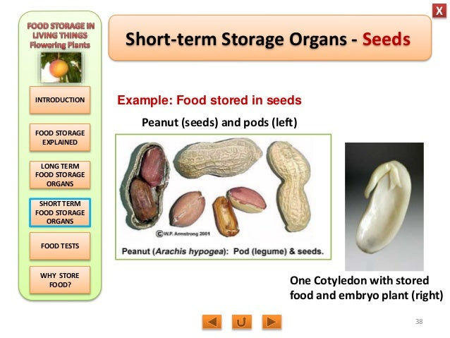 Biology M3 Food Storage in flowering plants