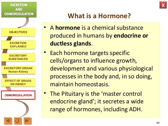 biology m3 excretion & osmoregulation, Human body