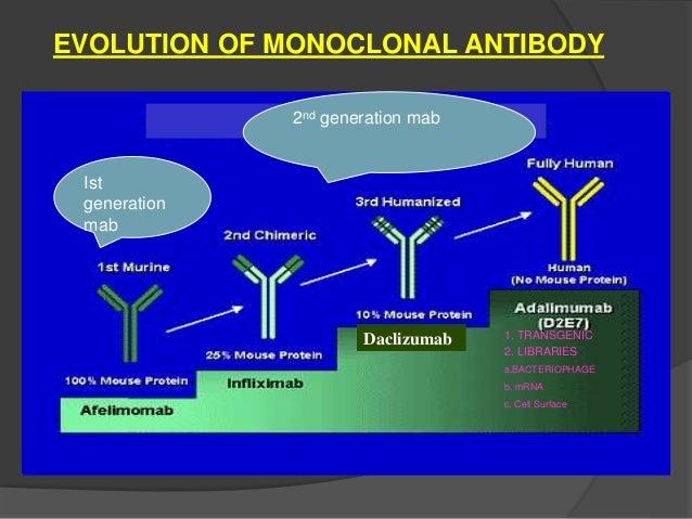 Monoclonal antibody