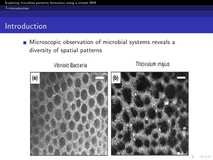 Exploring spatial pattern formation using a simple individual-based model Slide 3