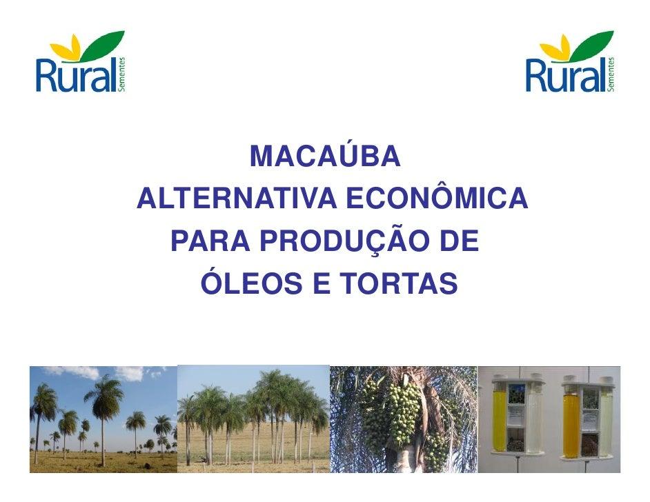 MACAÚBA ALTERNATIVA ECONÔMICA   PARA PRODUÇÃO DE     ÓLEOS E TORTAS