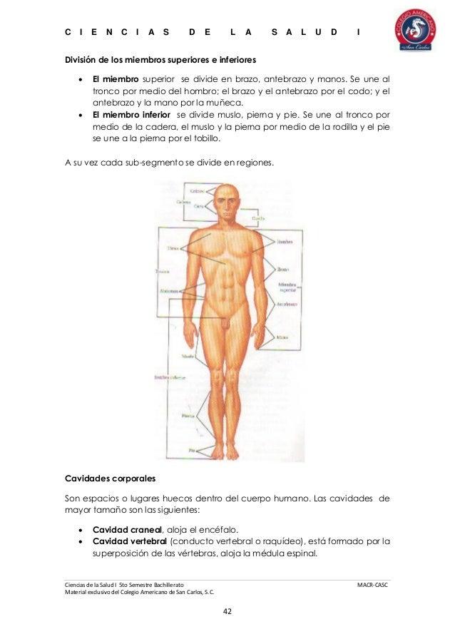 Fantástico Diagrama De Cavidades Corporales Fotos - Imágenes de ...