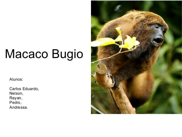 Macaco Bugio  Alunos:  Carlos Eduardo,  Nelson,  Rayan,  Pedro,  Andressa.