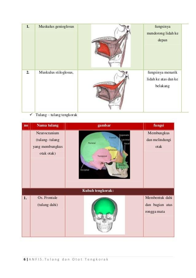 ANFIS Tulang dan Otot Tengkorak