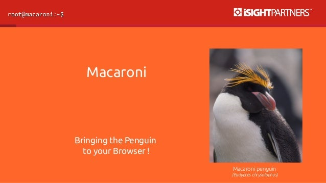 Macaroni  Bringing the Penguin  to your Browser !  Macaroni penguin  (Eudyptes chrysolophus)