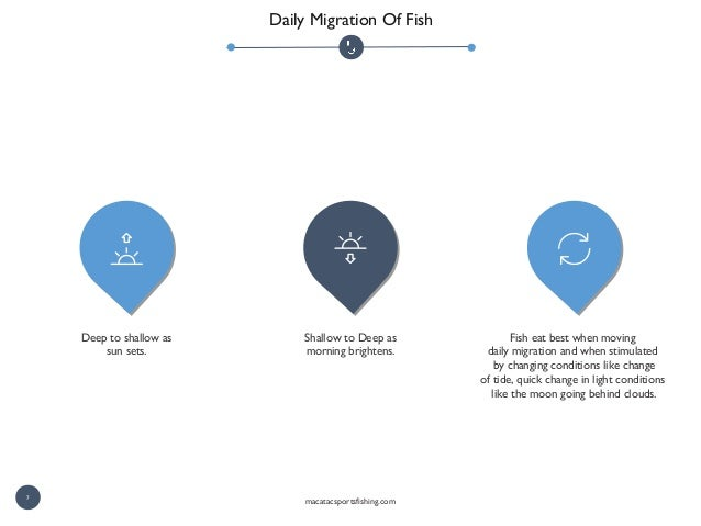 Daily Migration Of Fish Fish eat best when moving daily migration and when stimulated by changing conditions like change o...