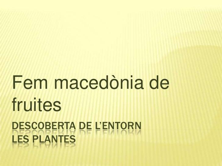 descoberta de l'entornLes plantes <br />Fem macedònia de fruites<br />
