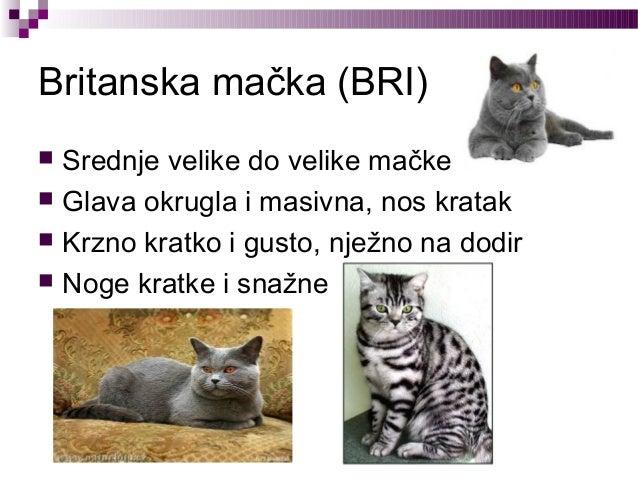 Blog velike mačke